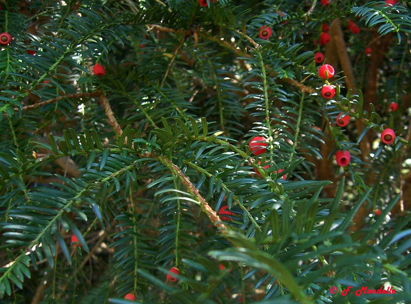 Monti nebrodi o caronie descrizione e foto dei nebrodi for Alberi simili alle querce